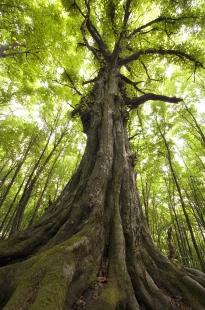 Tree / Vertical Alignment
